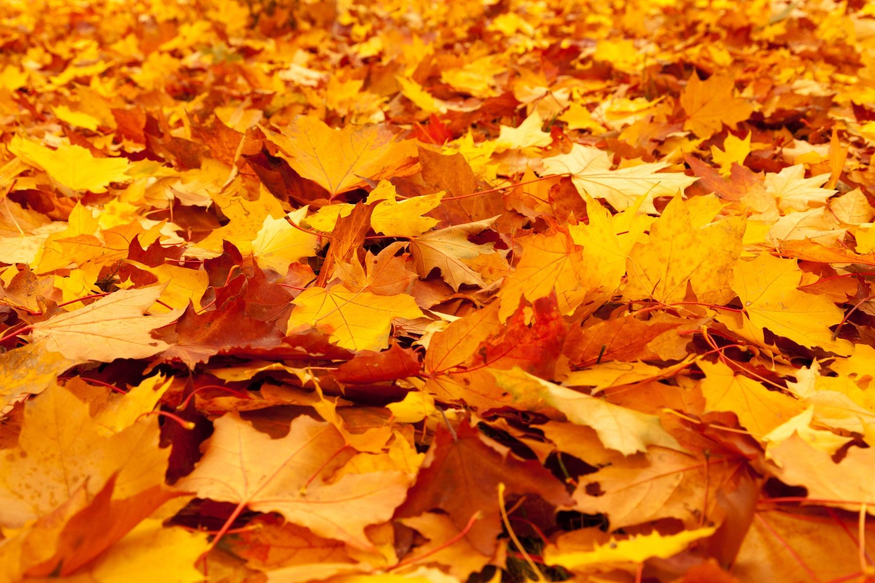 Jesienny konkurs fotograficzny odwołany